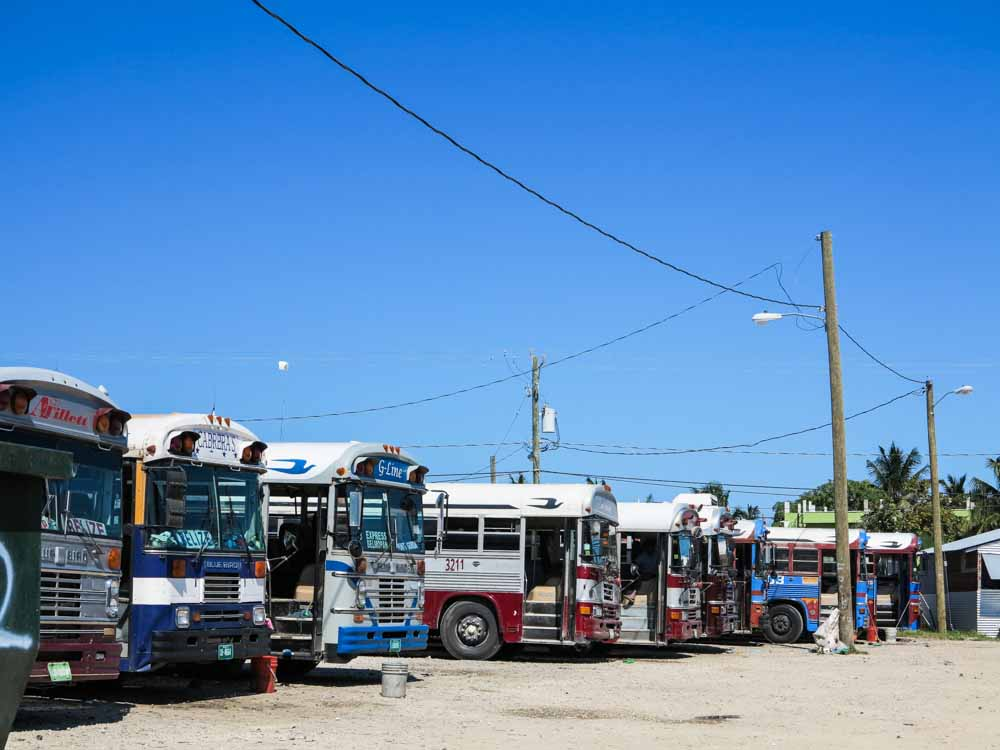 A row of buses, waiting to transport people from Belize City to Tikal