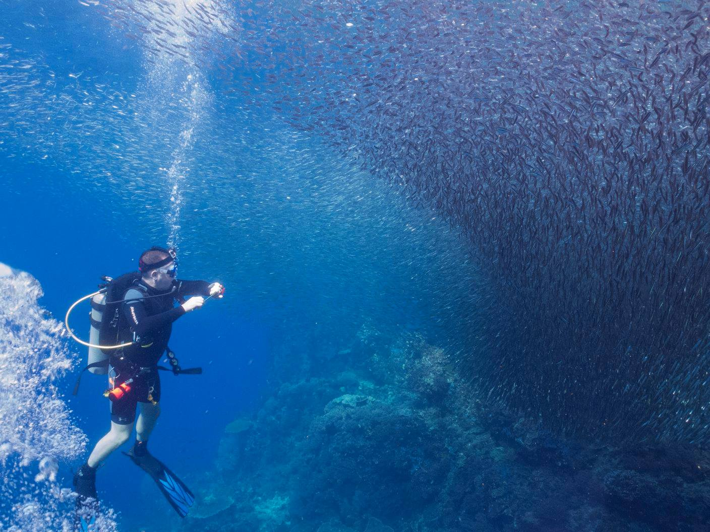 travel insurance. Michael surrounded by fish in Raja Ampat