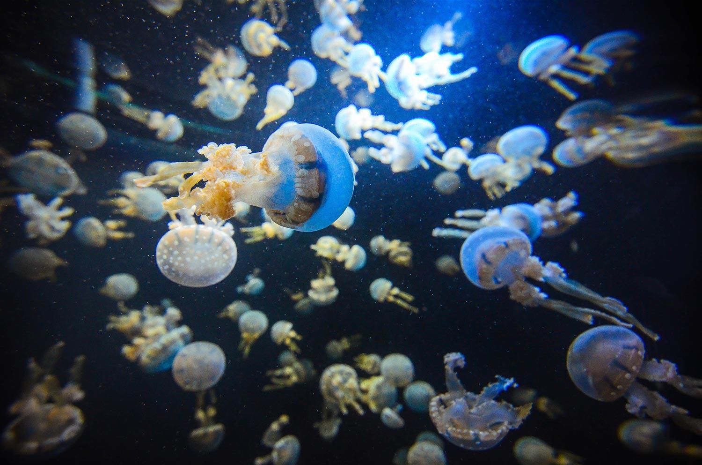 Singapore culture - Aquarium