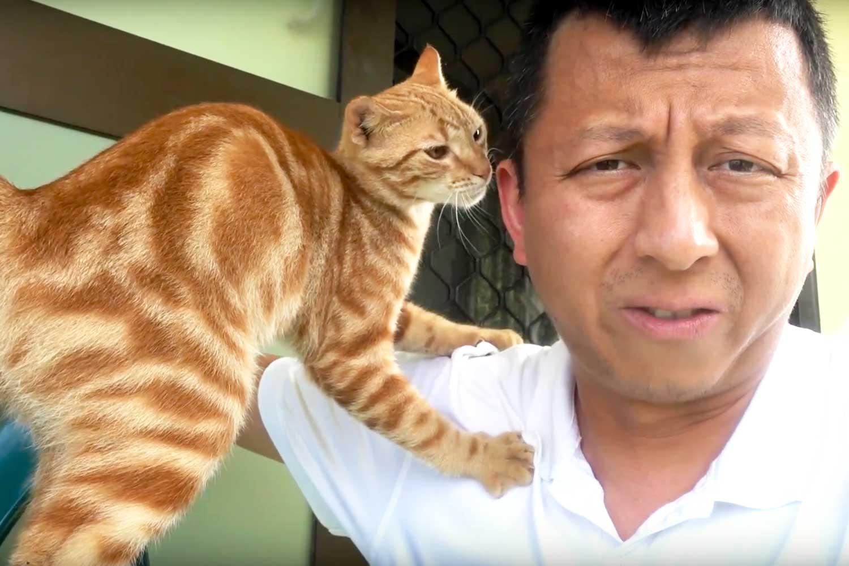 Aitutaki culture cats